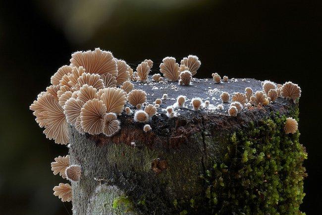 Удивительные грибы Австралии