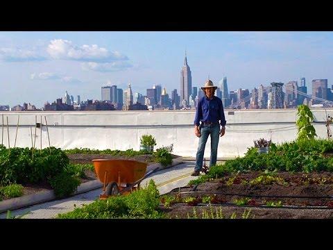 Ферма на крыше в Нью-Йорке