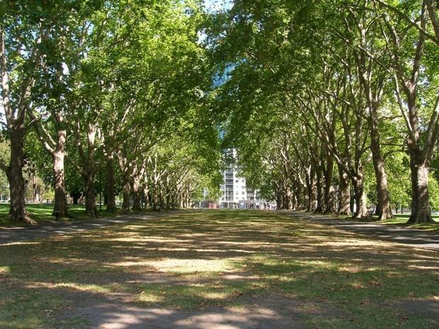 Деревья в Мельбурне