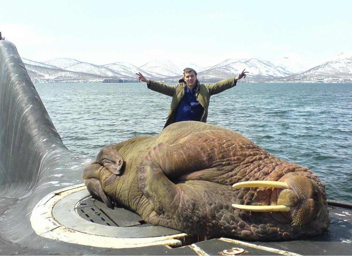 Морж на подводной лодке