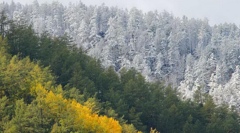 Осенняя палитра бурятского леса