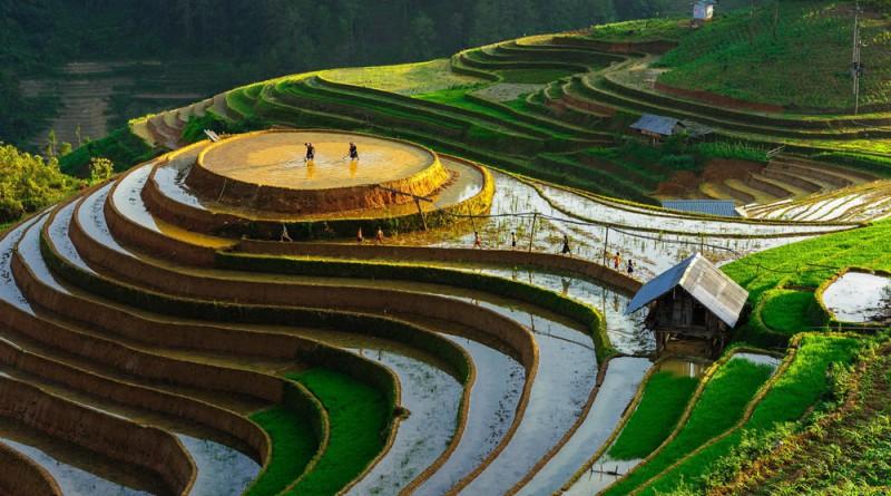Террасы во Вьетнаме