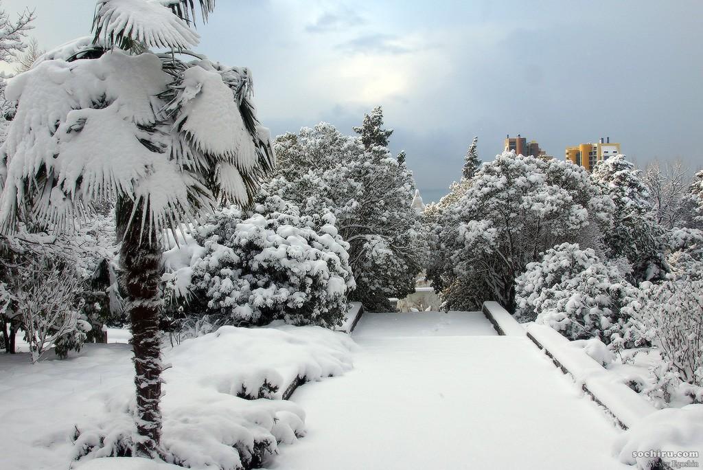 Снегопад в субтропиках: Сочинский дендрарий под снегом
