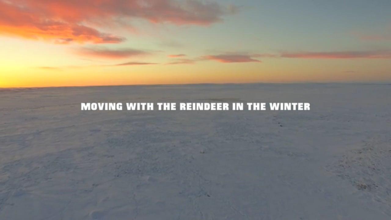 Мир северного оленя