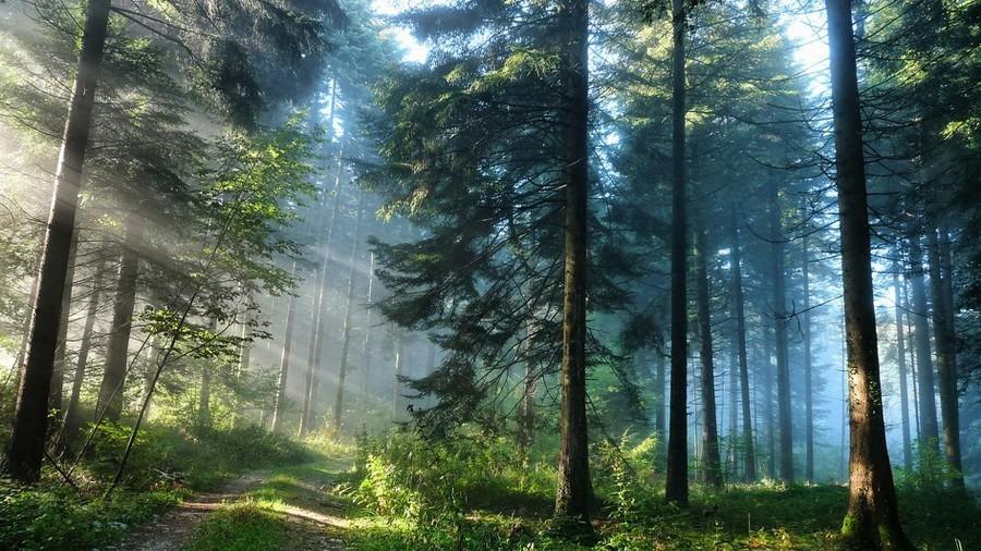 Лес - Дом для животных и растений. Каким он должен быть?