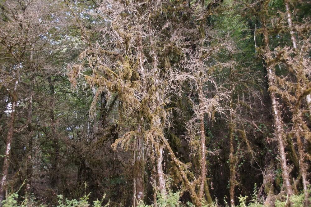 «НАБУ-Кавказ» пытается сохранить последние 5 гектаров самшитовых лесов России