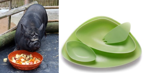 Тарелки из мочи свиней